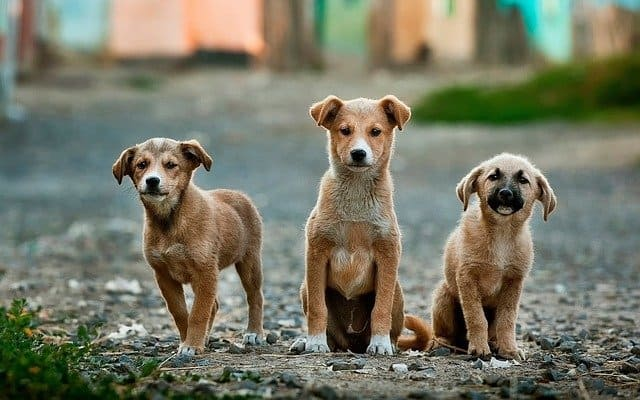3 perros