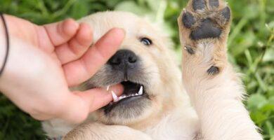 cachorro morderdiendo mano