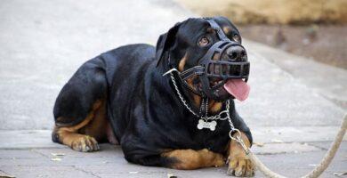 bozal para perro